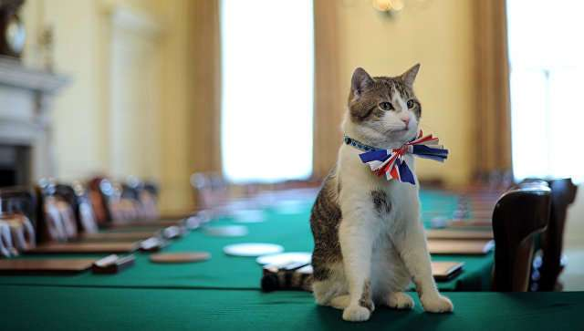 """Ленивого кота с Даунинг-стрит хотят лишить поста """"главного мышелова"""""""