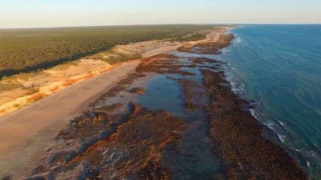 В Австралии нашли свой -Парк Юрского периода-