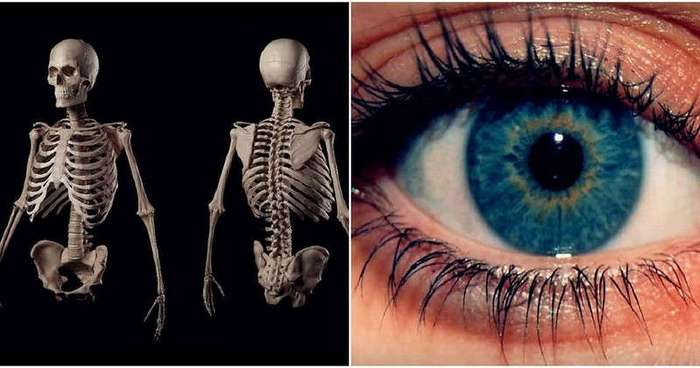 Поразительные тайны человеческого тела