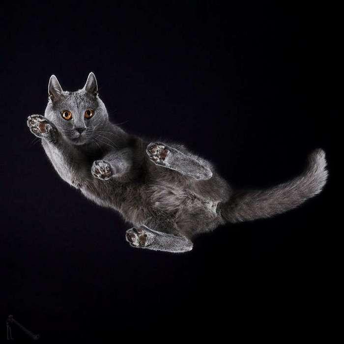 Кошки. Вид снизу