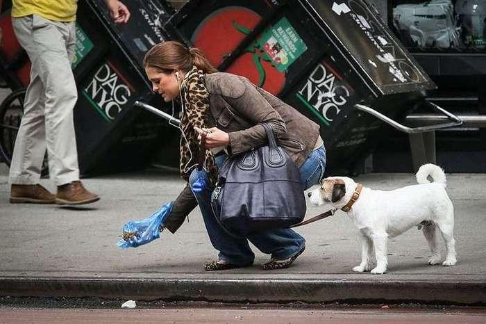 Владельцев собак заставят убирать за питомцами с помощью штрафов