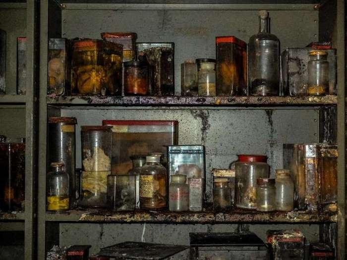 Внутри заброшенного ветеринарного колледжа в Брюсселе