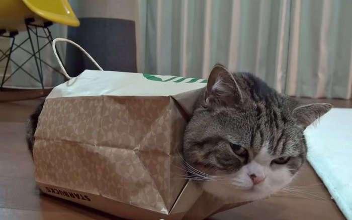 Мару – самый популярный кот