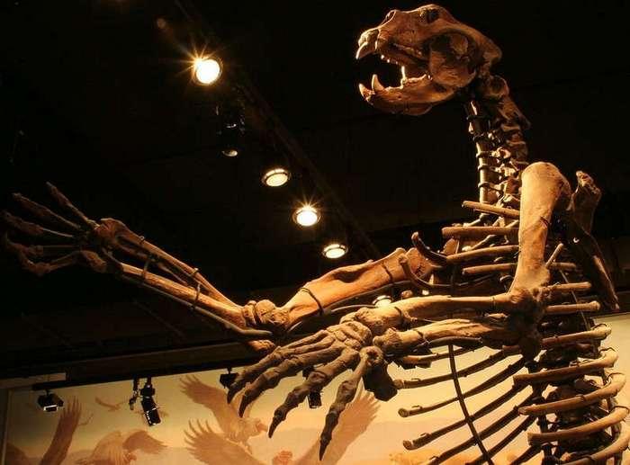 Главный хищник плейстоцена