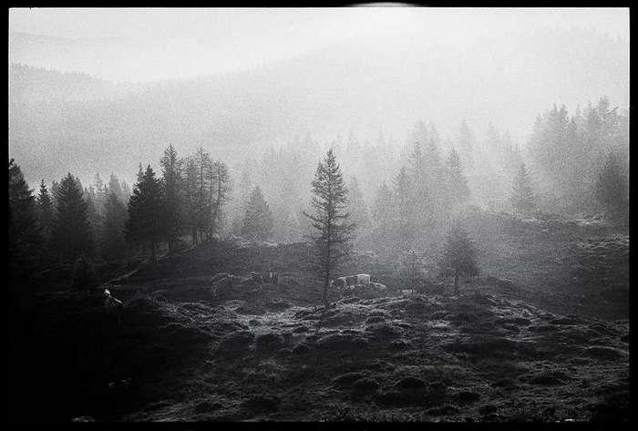 Исчезающее пятисотлетнее сообщество пастухов Словении