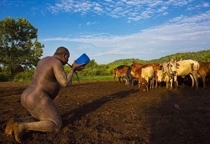 Кровь с молоком: конкурс на самого пузатого мужчину в Эфиопии