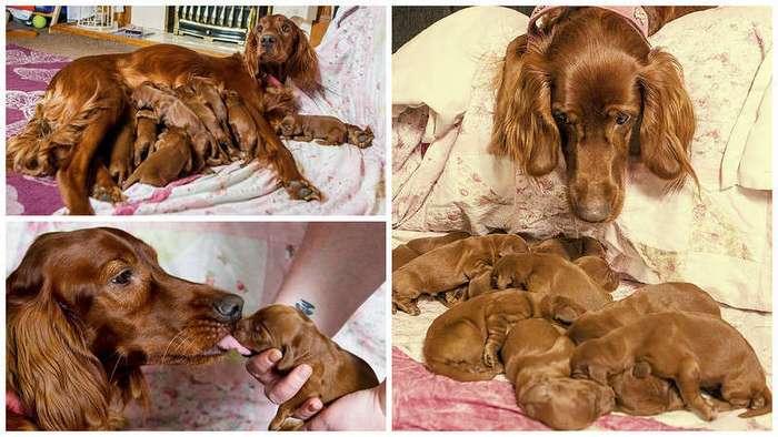 15 щенков ко Дню матери