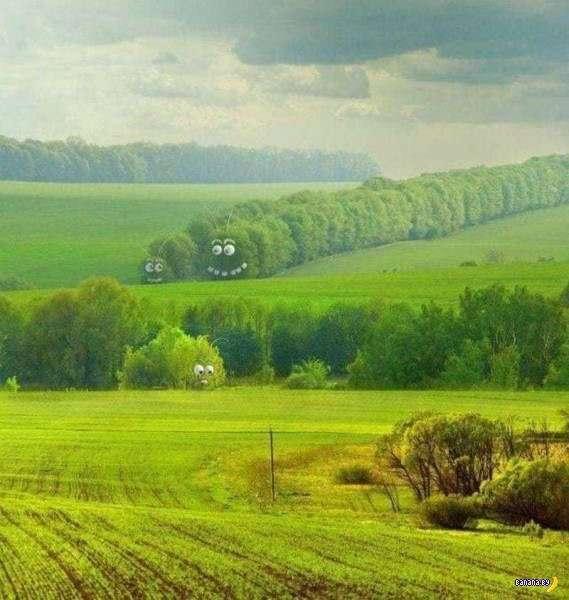 Прикольные картинки - 1805