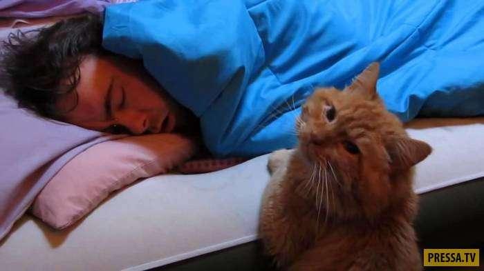 Самые интересные научные факты о кошках (11 фото)