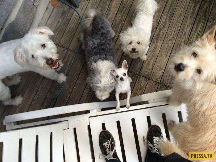 Собаки - это счастье (21 фото)