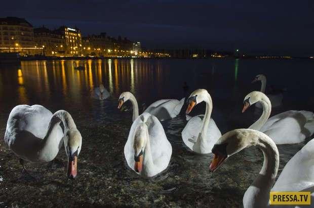 Дикая природа в городе (8 фото)