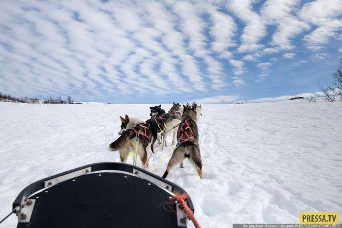 Самое лучшее средство передвижения в тундре (25 фото)