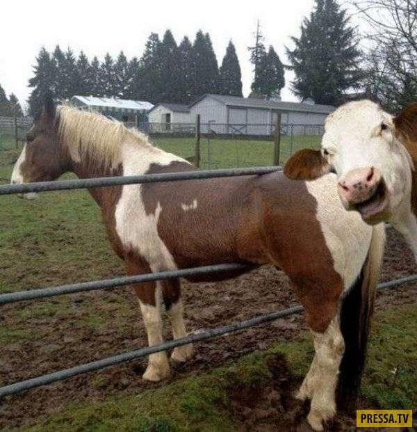 Самые смешные фотобомбы Сети (30 фото)