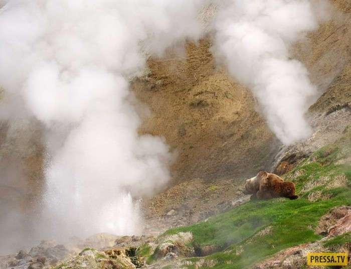 Медведи и гейзеры Камчатки (11 фото)