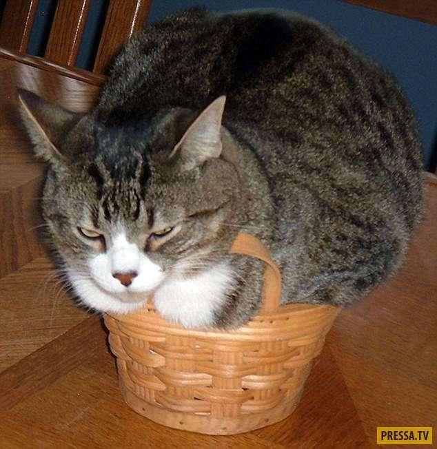 Эти милые котики способны примоститься где угодно (34 фото)