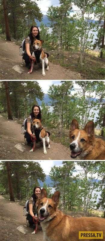 Забавные фотобомбы с собаками (23 фото)