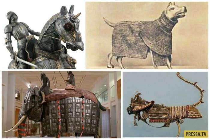 Защитные доспехи для боевых животных (25 фото)
