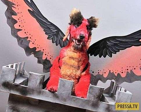 ТОП-10 удивительных и странных хобби в мире (10 фото)