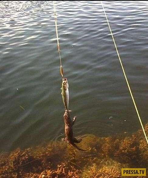 Необычный улов (10 фото)