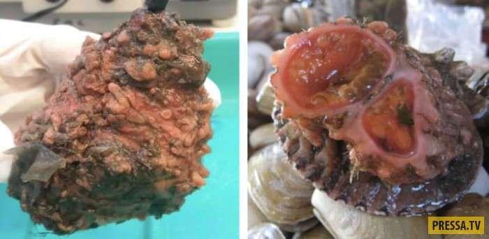 Деликатесы, которые совсем не похожи на еду (21 фото)