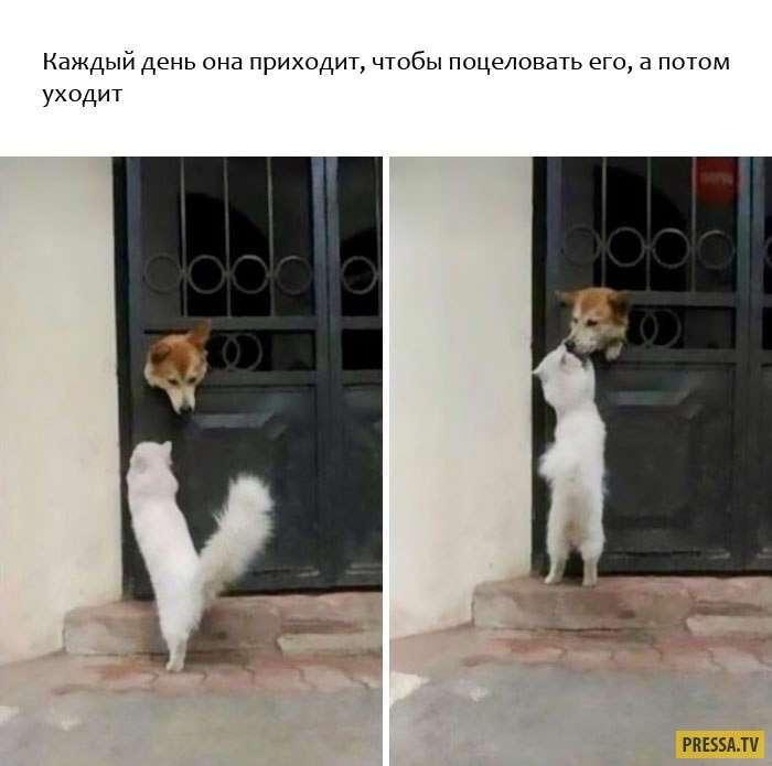 Прикольные животные, которые поднимут вам настроение (9 фото)
