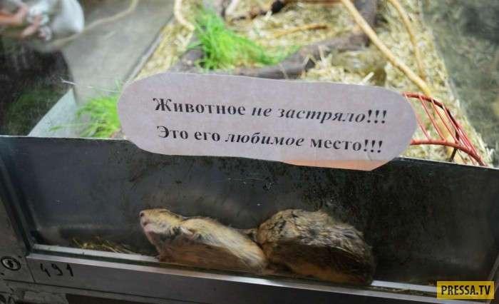 Те случаи, когда поход в зоопарк всех рассмешил (18 фото)