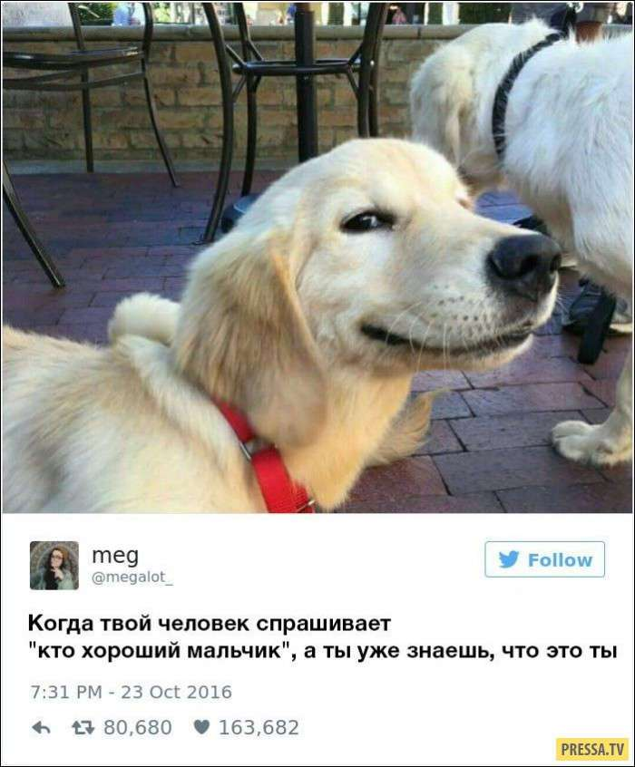 Записи владельцев собак в твиттере (8 фото)