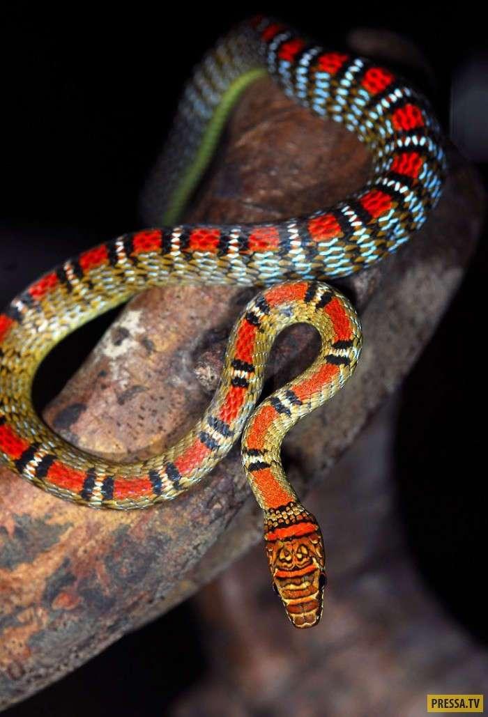 Летающие змеи (15 фото)