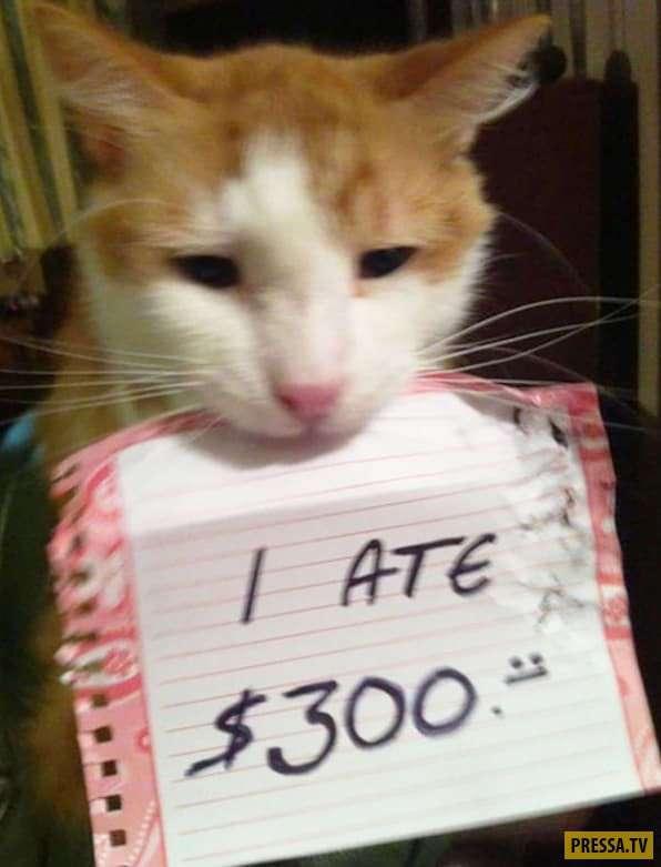 Как пристыдить обнаглевшего кота (19 фото)