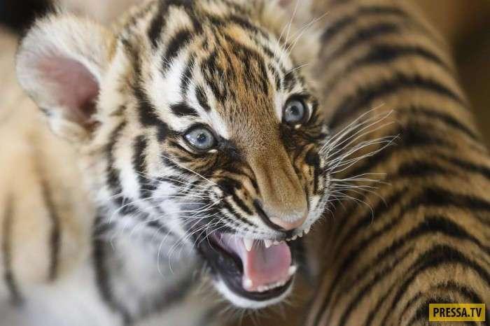 Позитивные и эмоциональные фотографии животного мира (21 фото)