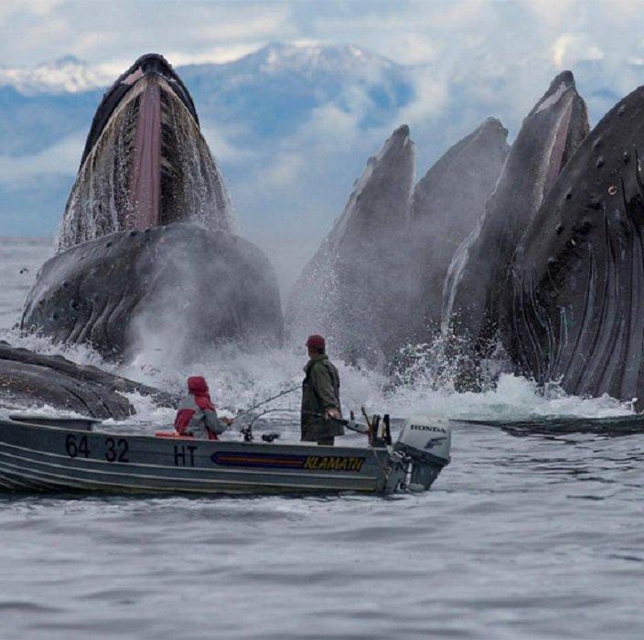 9 пугающих фотографий океана, после которых я в воду ни ногой!