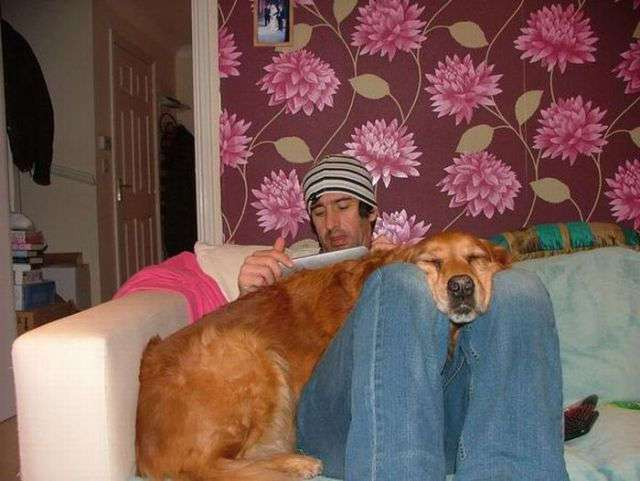 Собака - друг человека (20 фото)