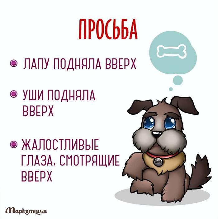 Что вам хочет сказать ваша собака?