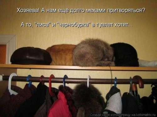 Воскресная котоматрица (16 шт)
