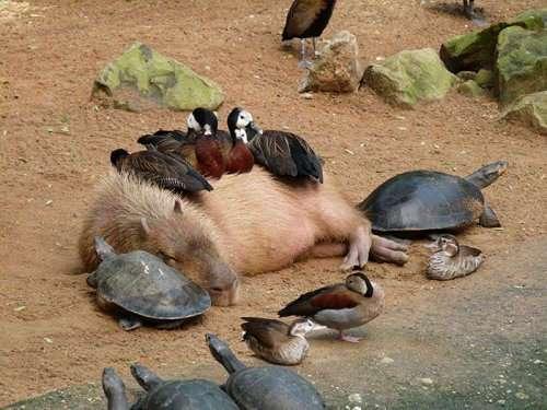 Животные, которым плевать на условности. Часть 2 (26 фото)