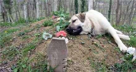 Отец семейства умер, а затем пропала его собака... Вот где ее обнаружили