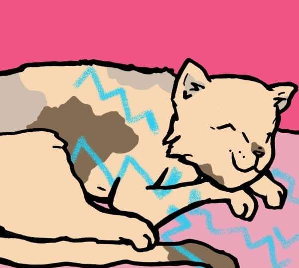 Ученые рассказали, как кошки влияют на здоровье человека