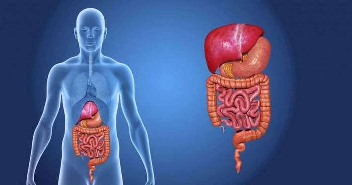 Вот что происходит с вашим организмом, когда вы пропускаете прием пищи