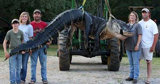 Они поймали гигантского крокодила, но больше всего поражает то, что было внутри него....