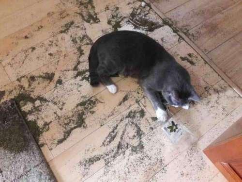 Почему домашних животных нельзя оставлять дома одних (26 фото)