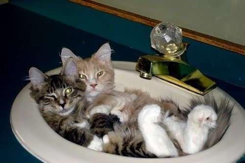 Кошки, которые поместятся в любую тару (23 фото)