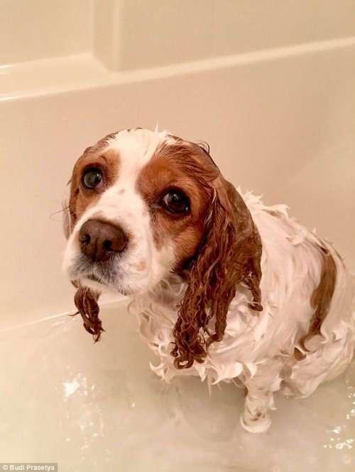 Домашние животные, которые не любят водные процедуры (17 фото)