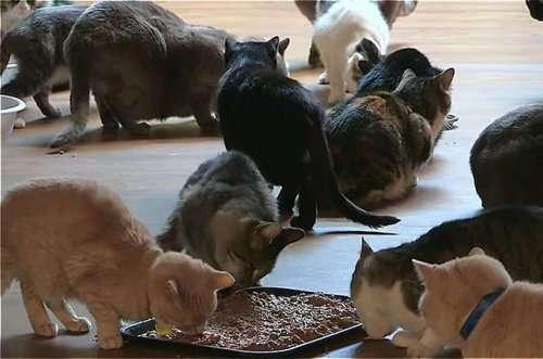 Женщина, которая живёт с тысячей кошек (8 фото + видео)