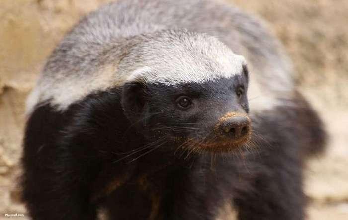 15 милых, но только на первый взгляд, животных, которые могут вас убить