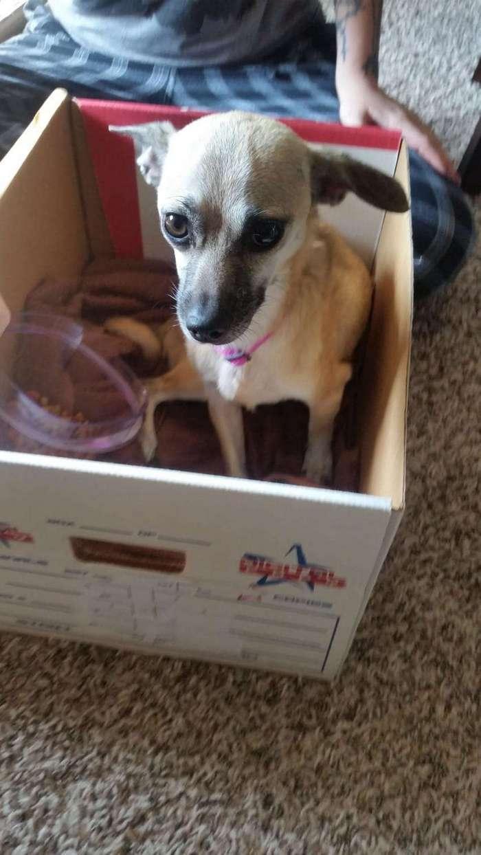 Эта истощенная собака была так голодна, что ела пластик... Какое счастье, что ее заметили ОНИ