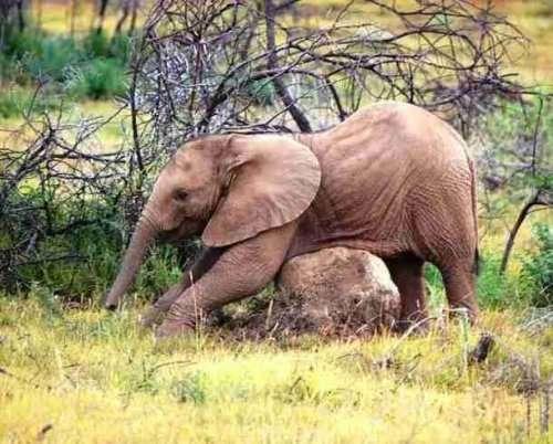 Прелестные слоники, которые подарят вам улыбку (25 фото)
