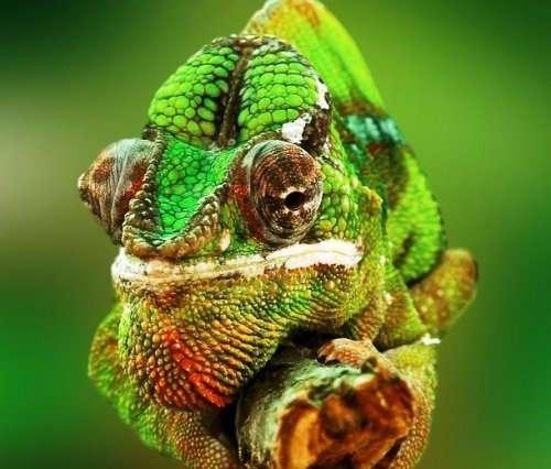 Топ-25: Интересные факты про хамелеонов, которые вы хотели знать