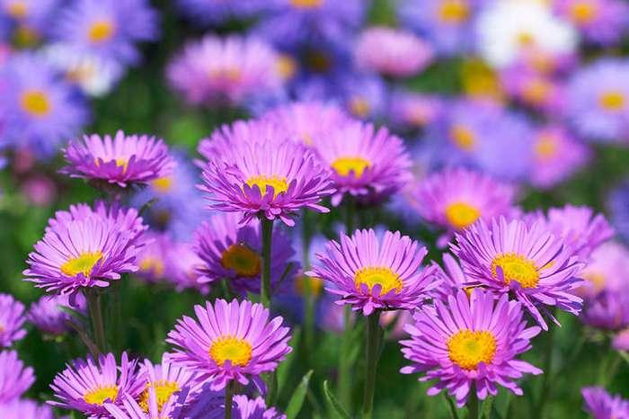 Лучшие цветы для вашего сада согласно астрологическому гороскопу