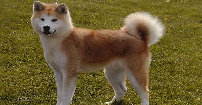 Топ 10 пород собак, наиболее склонных к тому, чтобы вас укусить