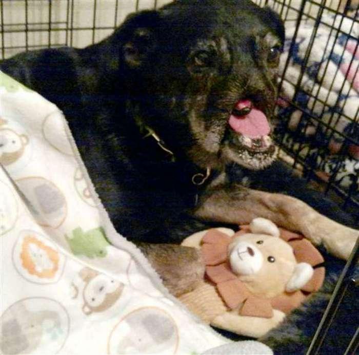 Этой собаке отрезали морду, чтобы она не лаяла... К счастью, сейчас она в безопасности